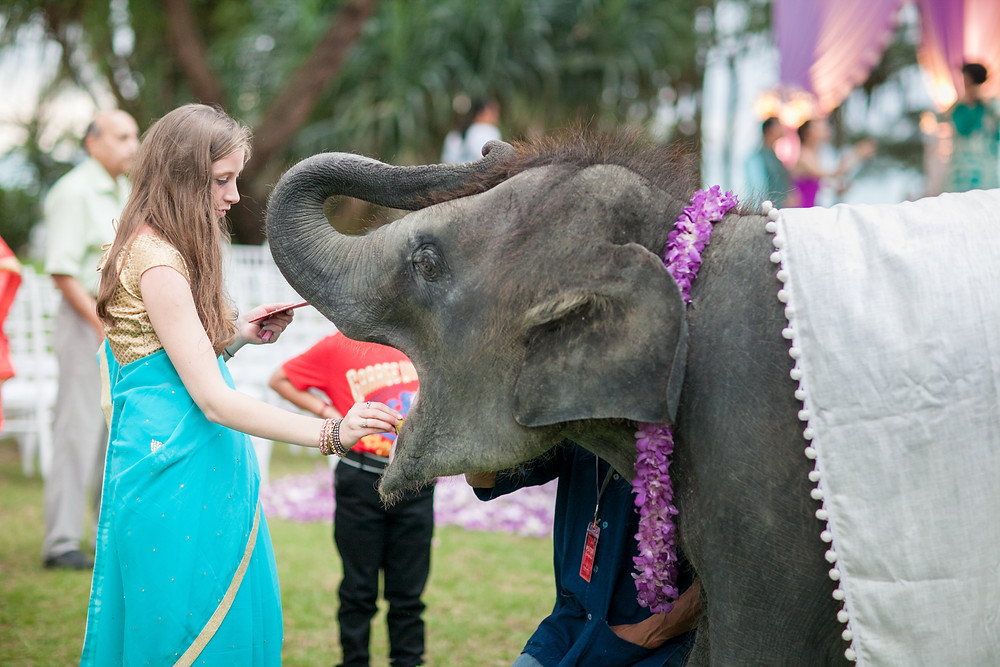Greeting All the Guest by Bai Bua , The Baby elephant