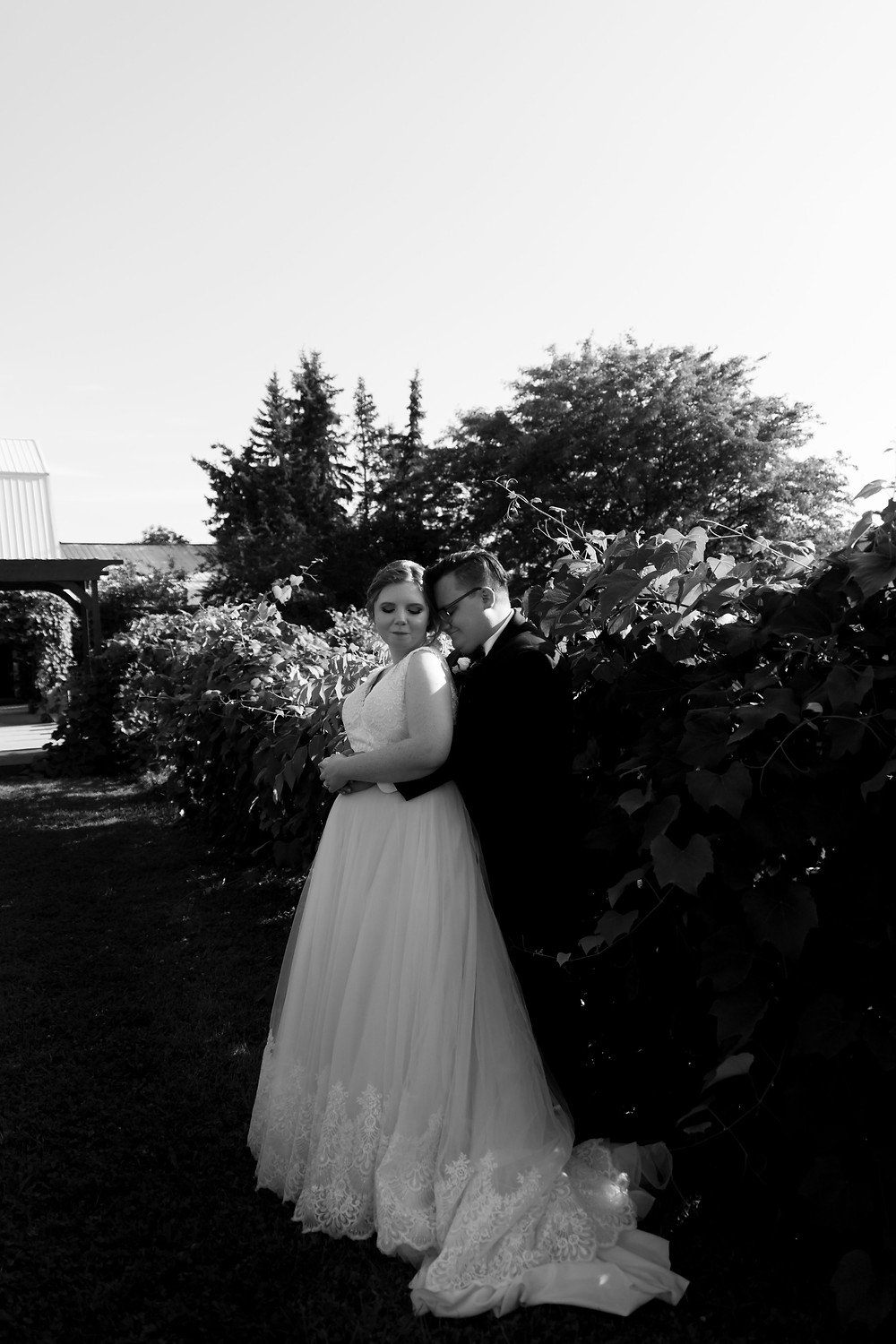 bridal portrait Becker Farms Vizcarra Vineyards Gasport NY summer wedding elopement