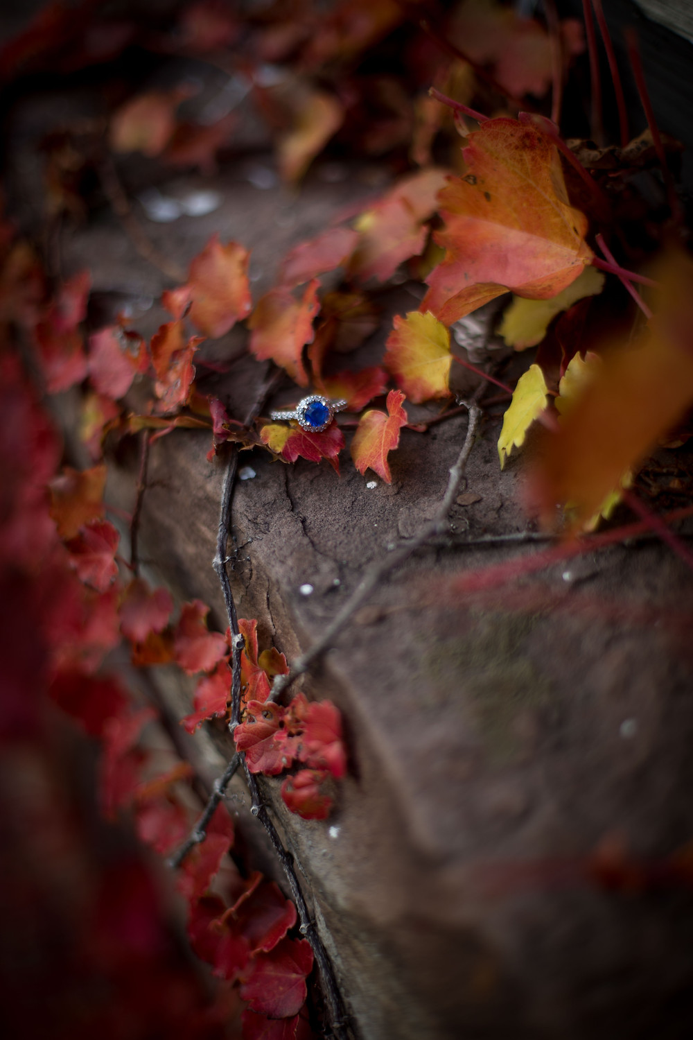 red fall leaves with sapphire engagement ring