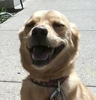 Denver Dog Walkers Client