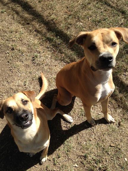 Kiva and Kali - Denver Dog Walker and Pet Sitters