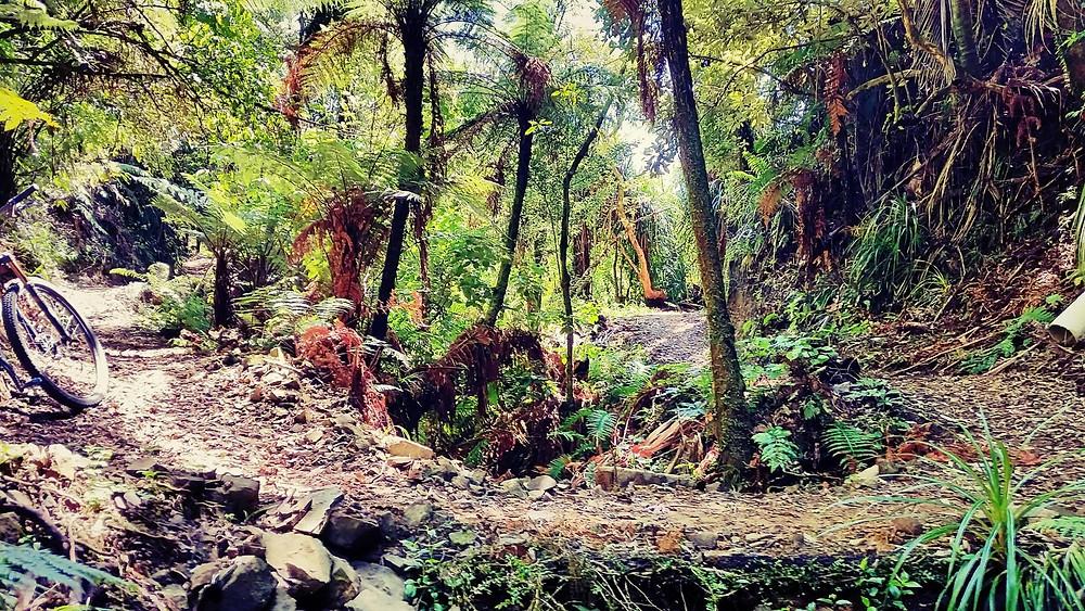 Whakaumu Track