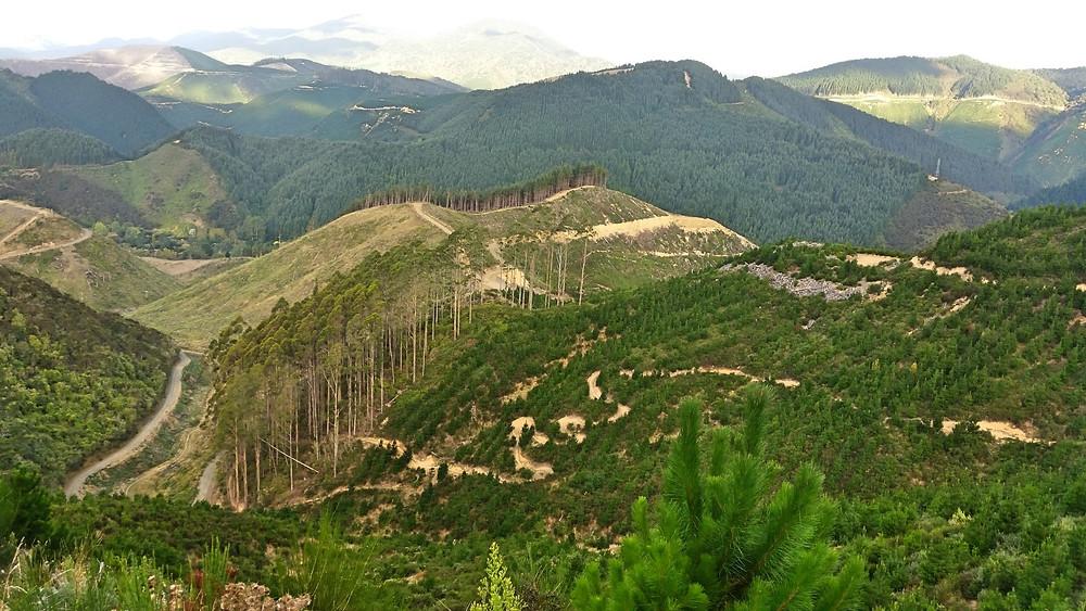 Nelson MTB Trails