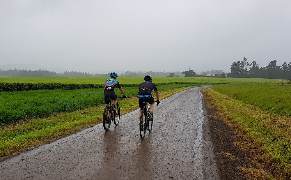 Rolling past the Nerada Tea plantations.