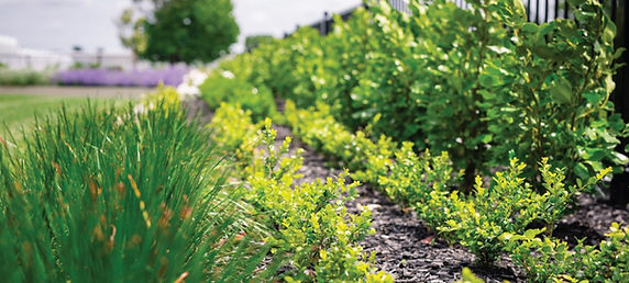 weed-control-smart-garden-auckland.jpg