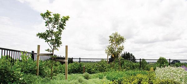 tree-care-smart-garden-auckland.jpg