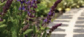 moss-control-smart-garden-auckland.jpg