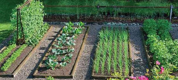 vegetable garden-maintenance-smart-garde