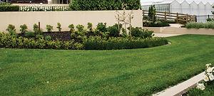 lawn-care-smart-garden-auckland.jpg