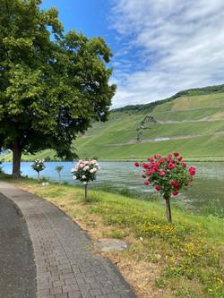 Uferallee Bernkastel-Kues (Wehlen)