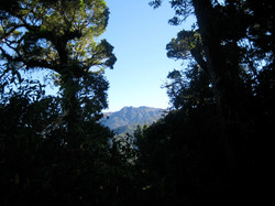 entering forest