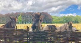The Horses Crown Lodge.jpg