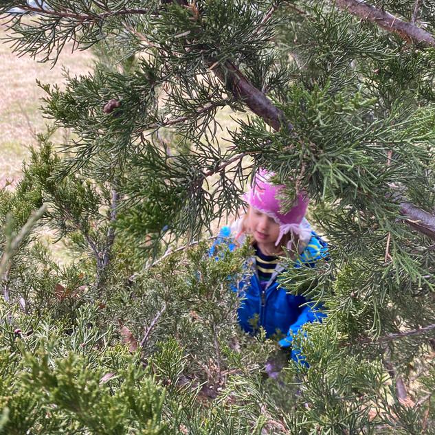 Eleanor through the juniper