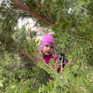 Eleanor through the Juniper branches
