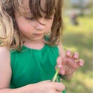 Eleanor discovering the milky liquid that comes from Milkweed