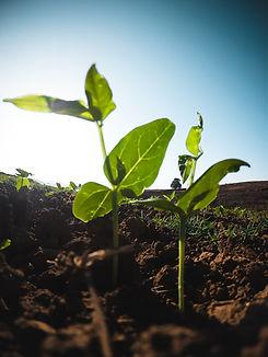green-leafed-plants-2218364.jpg