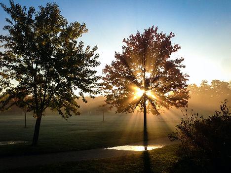 green-leaved-tree-on-green-grass-field-d