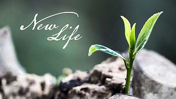 19-4-21 New Life (Easter) - WEB.jpg