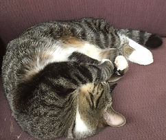 Working Cat