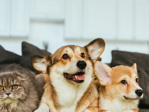 DO'S AND DON'TS WHEN MOVING WITH PETS