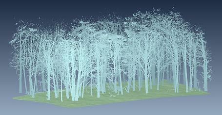 Relevés 3D des arbres, numérisation 3D, LiDAR