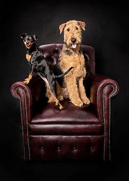 Miniature Pinscher & Airedale Terrier