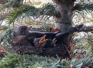 Padding the Nest