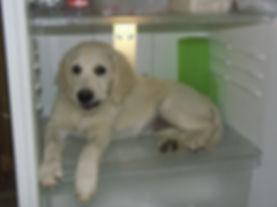Daisy20-01-09e.JPG