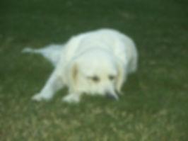 Daisy8-5-2011.JPG