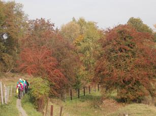 NWLH - Nordic Walking de La Houssière