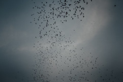 Birds, Bali - 2015