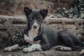 Dog, Bali - 2015