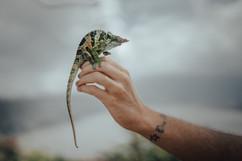 Chameleon, Bali - 2015