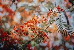 Flowers, Bali - 2015