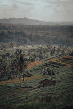 Ricefields, Bali - 2015