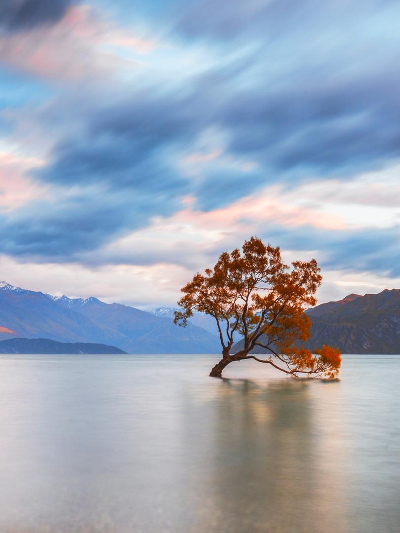 NZ_WANAKA TREE.jpg