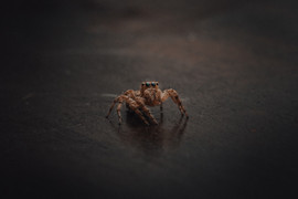 Spider, Bali - 2015