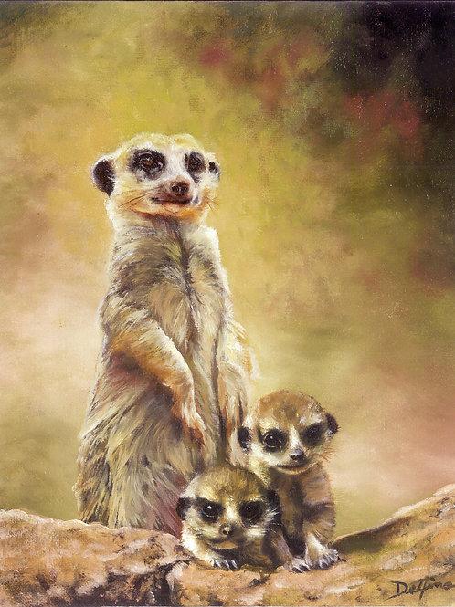 Meerkats 8x10