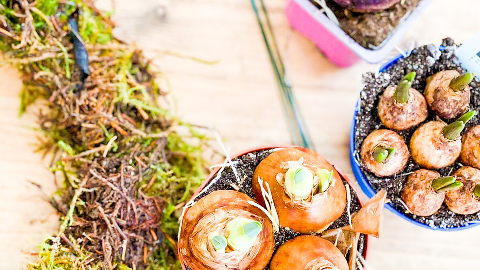 DIY Mossed Spring Wreath with Seasonal Bulbs Workshop in a Box