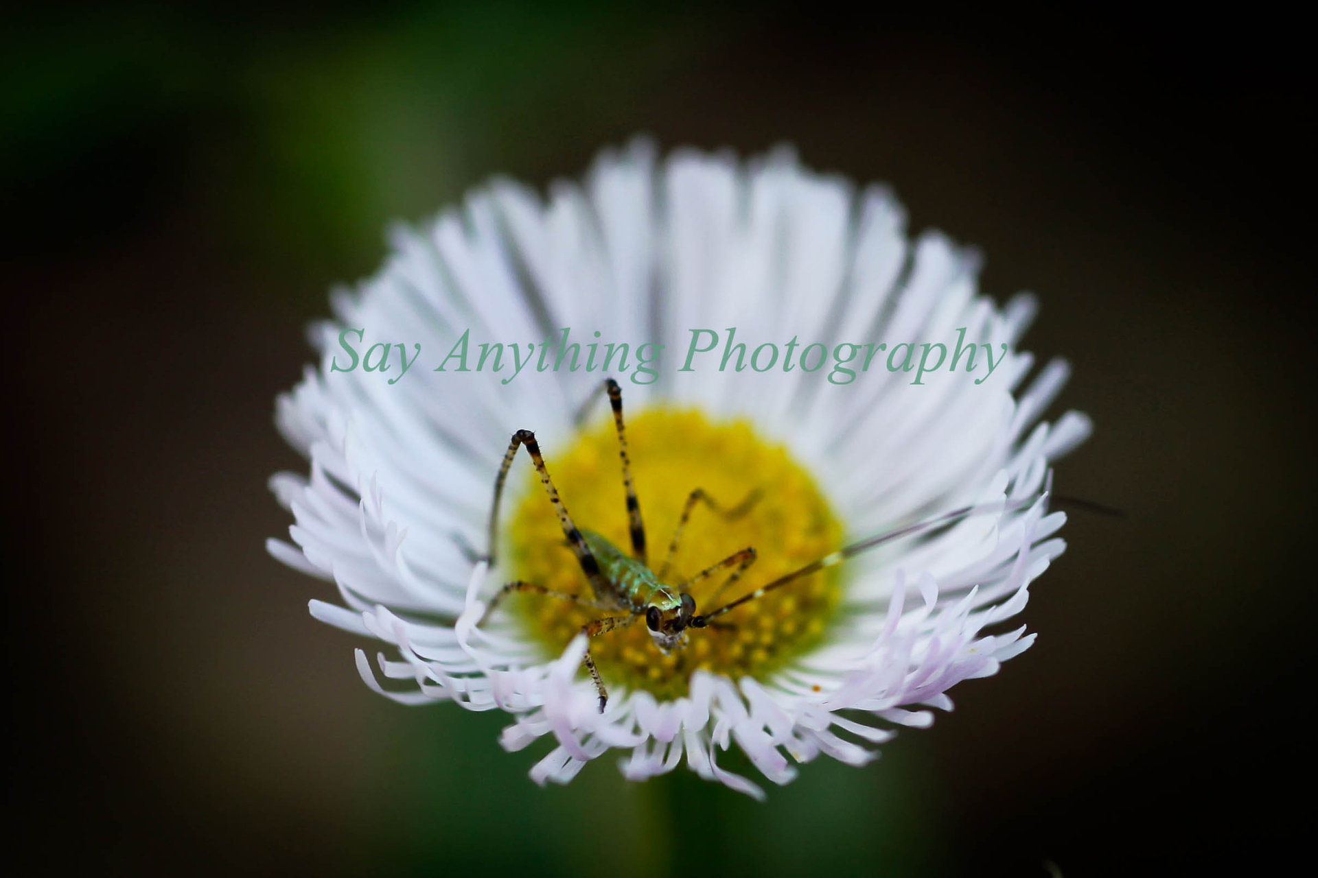 Bugs Life 2