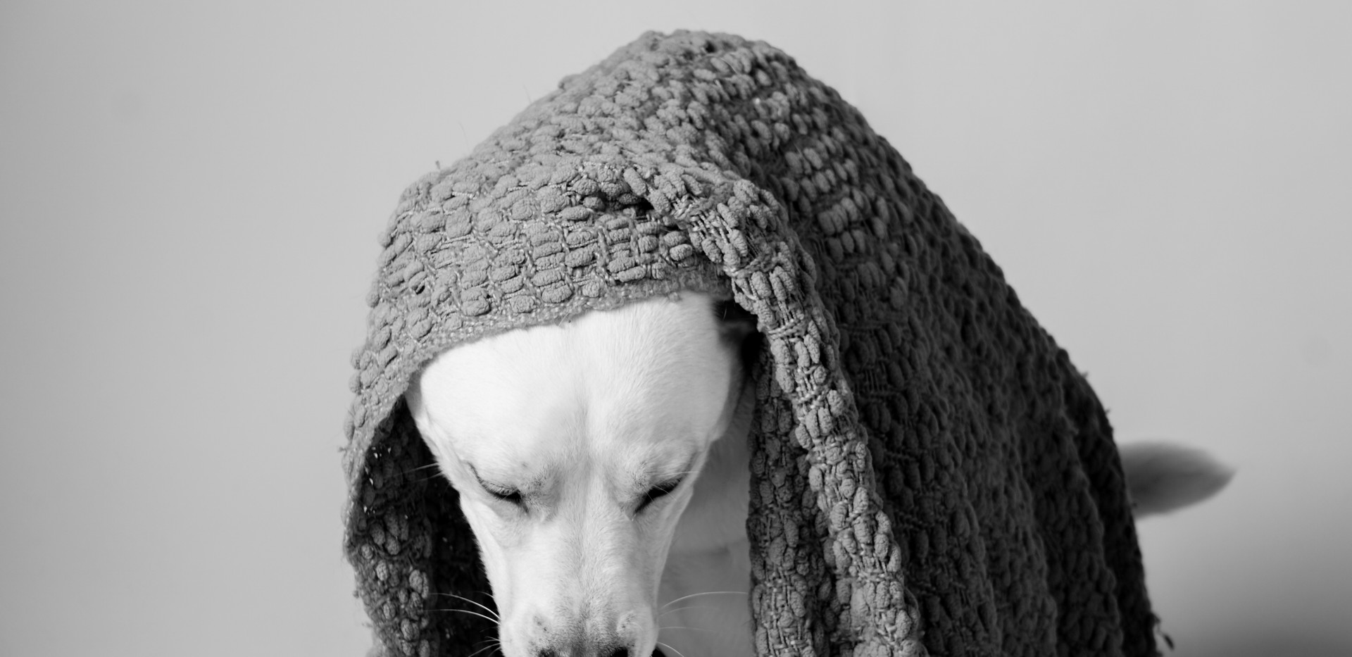 Mckenzie Pups-77.jpg