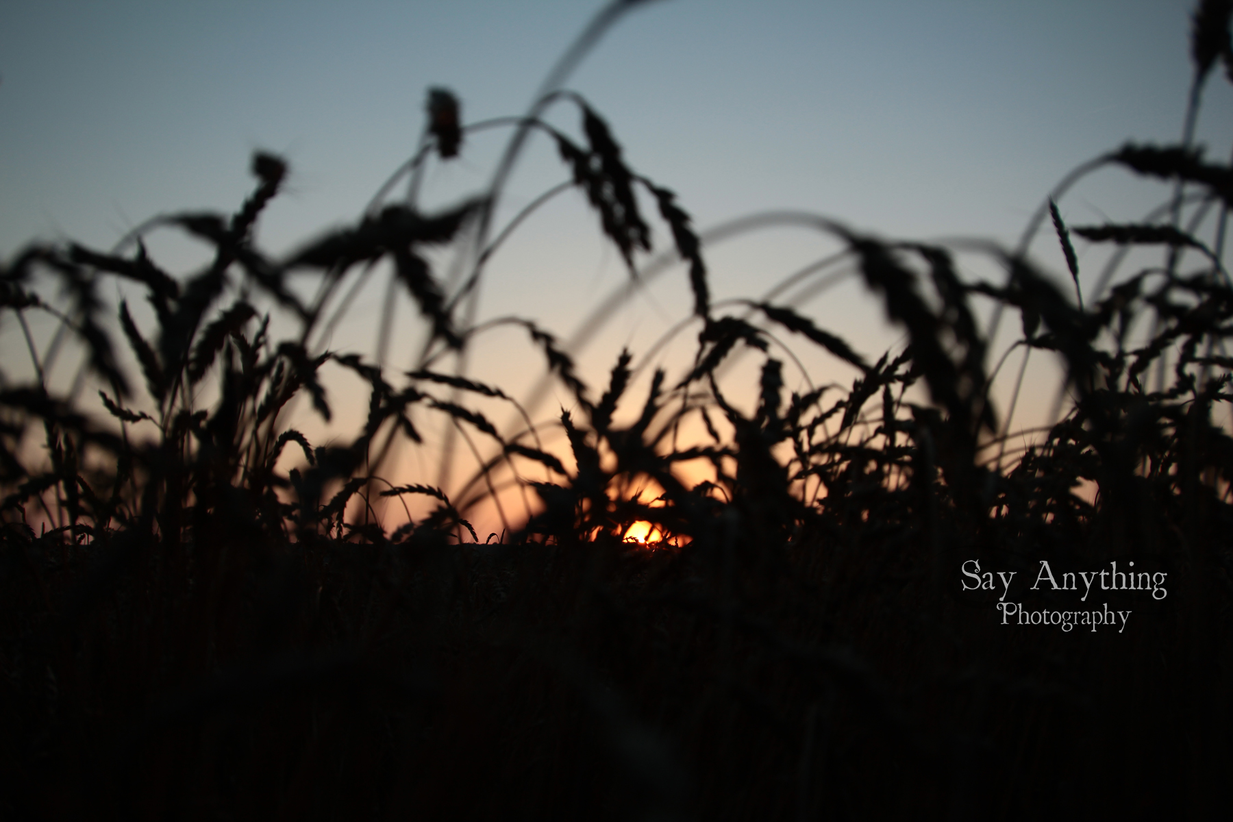 Say Anything Photography WM190.jpg