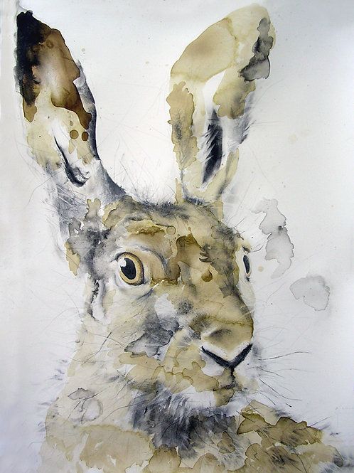 Fine Art Print: Head of a Hare