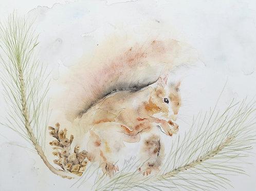 Red Squirrel - Original Painting