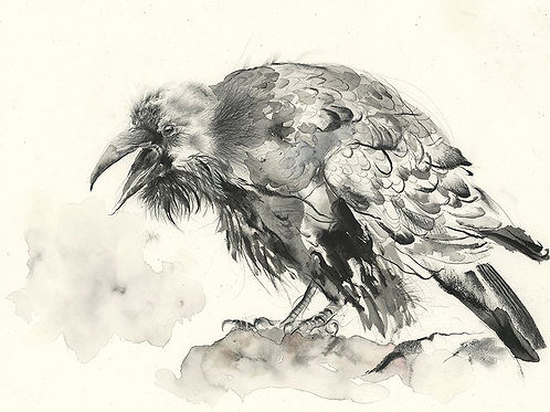 Raven - Original Drawing