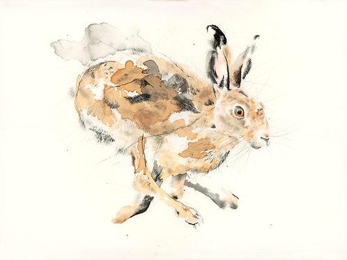Fine Art Print: Running Hare