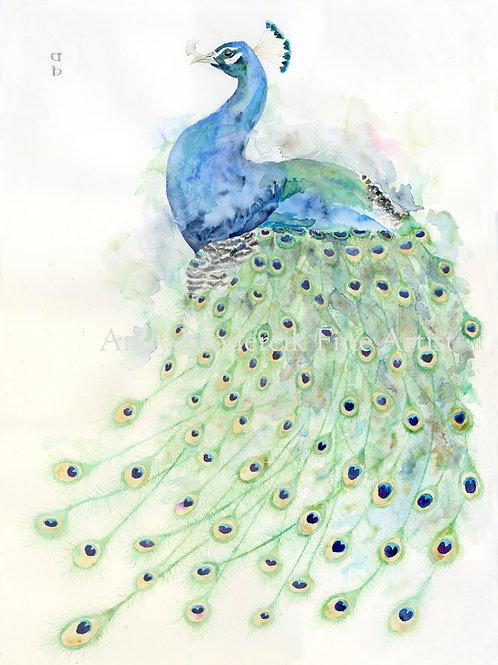 Fine Art Print: Peacock