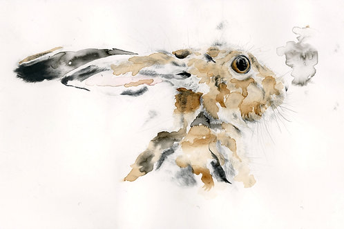 Fine Art Print: Head of a Hare III