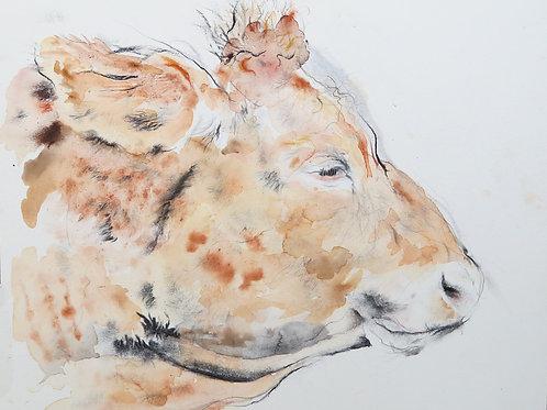 Head of a Bullock - Original Painting
