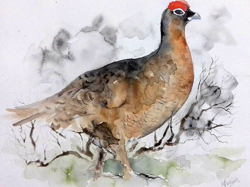 Red Grouse - Original Painting
